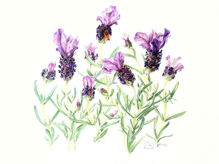 curso-de-dibujo-botanica-1