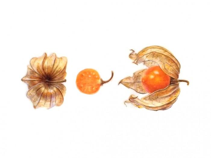 curso-de-dibujo-botanica-3