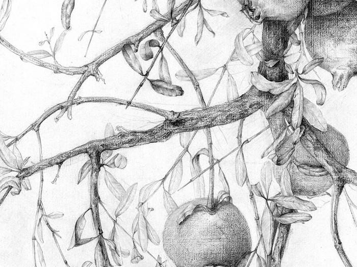 curso-de-dibujo-botanica-4