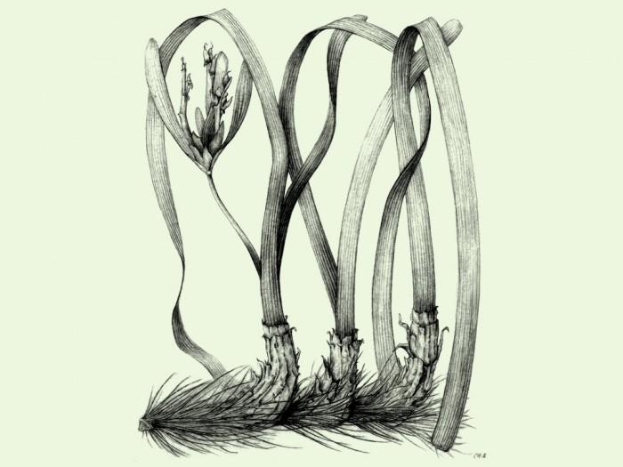 curso-de-dibujo-botanica-6