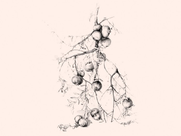 curso-de-dibujo-botanica-7