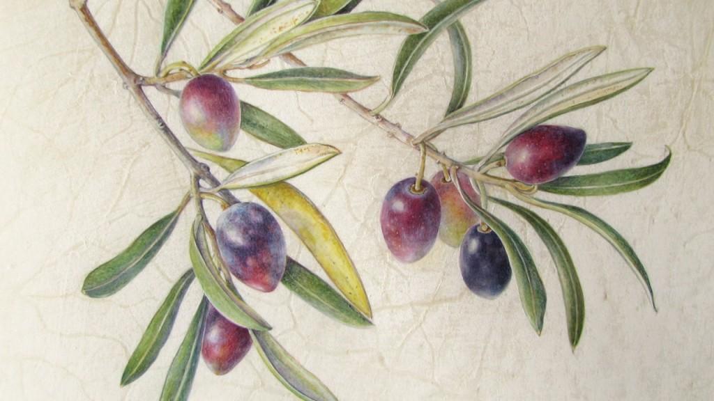 curso-de-dibujo-e-ilustracion-botanica