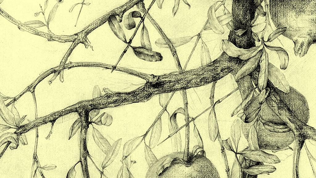 curso-de-dibujo-botanica-portada